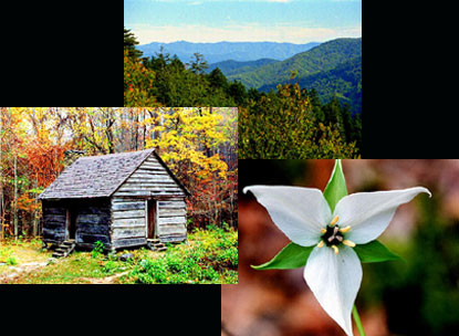Smoky Mountains Rental Cabins in Wears Valley